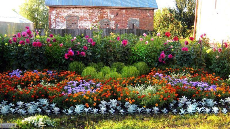 Цветы к клумбе на даче своими руками